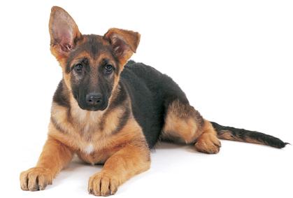 Сухие корма для собак ROYAL CANIN - купить сухие корма для